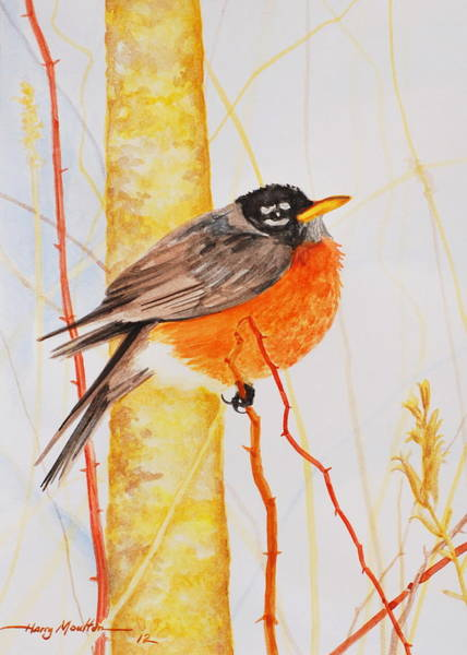Painting - Winter Robin by Harry Moulton