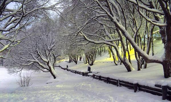 Photograph - Winter Scene 1 by Sami Tiainen