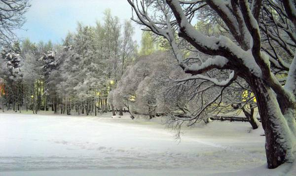 Photograph - Winter Scene 3 by Sami Tiainen