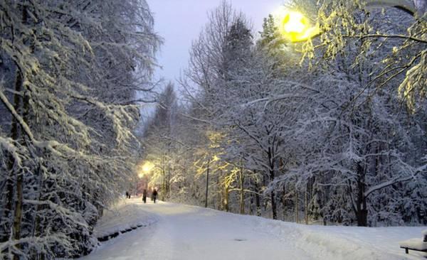 Photograph - Winter Scene 5 by Sami Tiainen