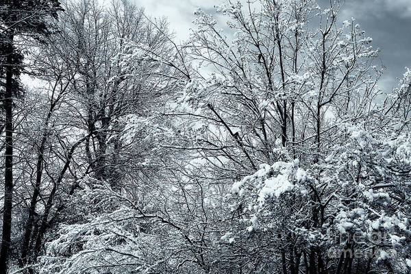 Photograph - Winter Scene by Jill Lang