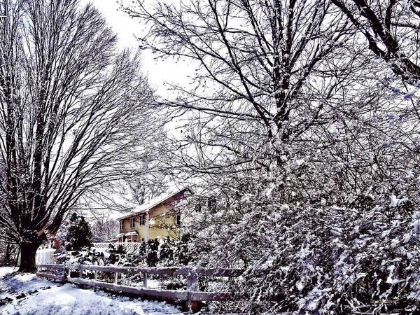 Photograph - Winter Scene by Susan Savad