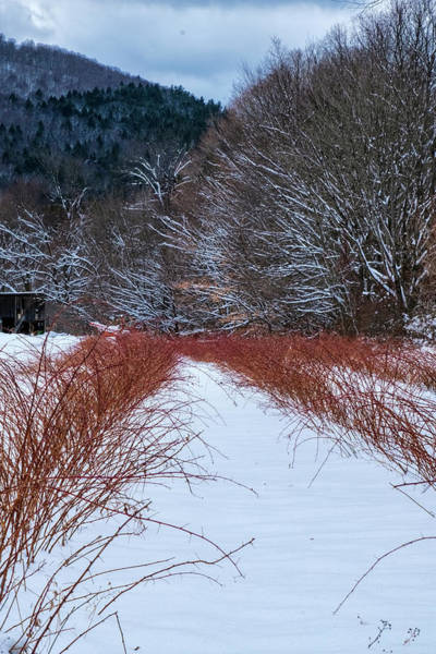 Photograph - Winter Scene by Tom Singleton
