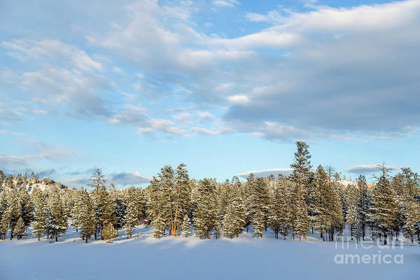 Wall Art - Photograph - Winter Silence by Julia Hiebaum