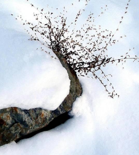 Wall Art - Digital Art - Winter Simplicity by Will Borden