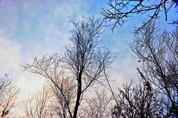 Photograph - Winter Sky by Gina O'Brien