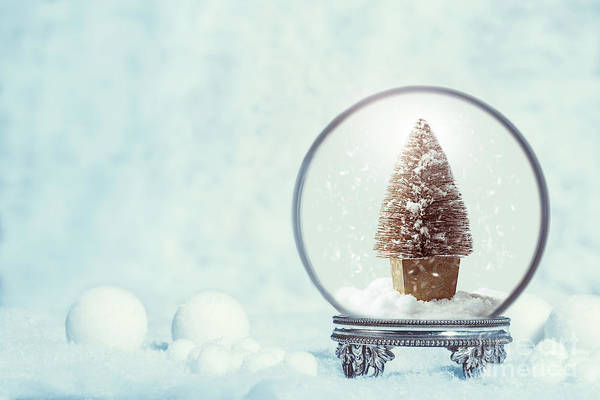 Wall Art - Photograph - Winter Snow Globe With Christmas Tree by Amanda Elwell