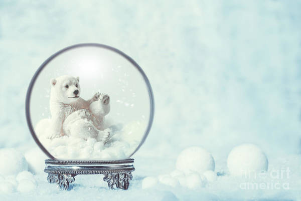 Polar Bear Photograph - Winter Snow Globe With Polar Bear by Amanda Elwell