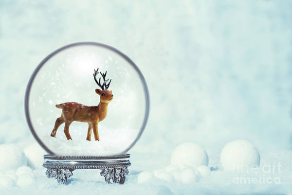 Wall Art - Photograph - Winter Snow Globe With Reindeer Figure by Amanda Elwell