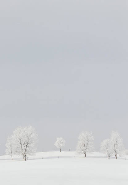 Photograph - Winter Snow Scene - Barely There Vertical by Patti Deters