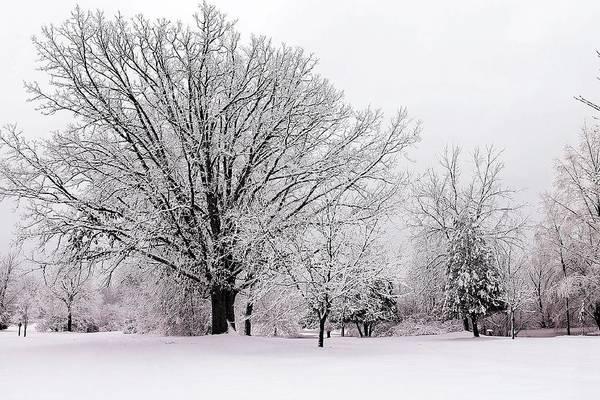 Photograph - Winter Snow Storm 1 by Scott Hovind