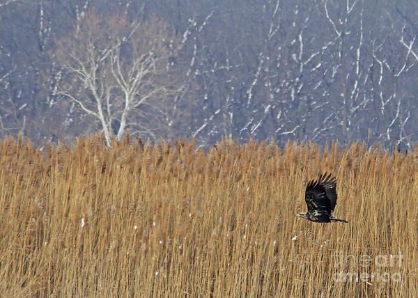 Photograph - Winter Solace by Paula Guttilla