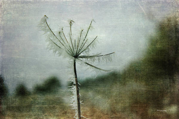 Photograph - Winter Star by Randi Grace Nilsberg
