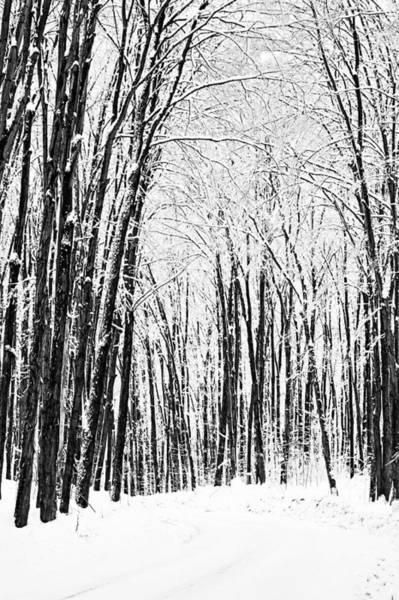 Winter Startk Art Print