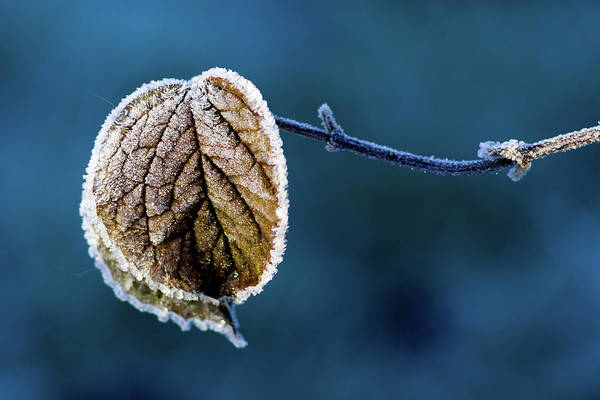 Flake Photograph - Winter  by Stelios Kleanthous