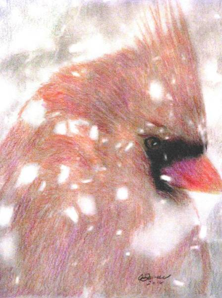 Red Cardinal Drawing - Winter Storm by Angela Davies