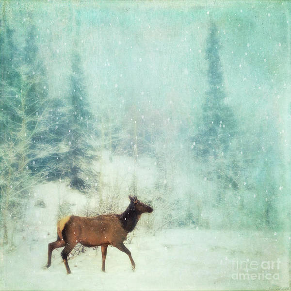 Wall Art - Photograph - Winter Stroll by Priska Wettstein