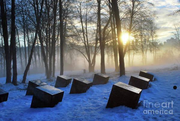 Photograph - Winter Sun by Bill Thomson