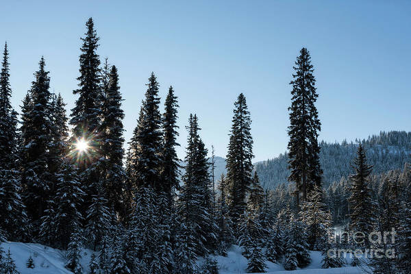 Photograph - Winter Sun by Brad Allen Fine Art