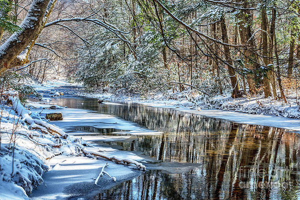 Photograph - Winter Sunlight On Cranberry River by Thomas R Fletcher