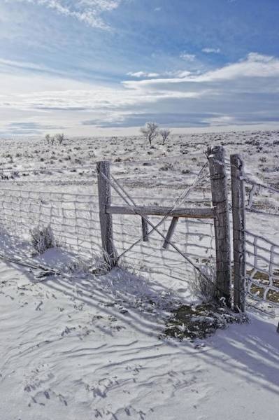 Photograph - Winter Sunlight On The South Fenceline by Amanda Smith
