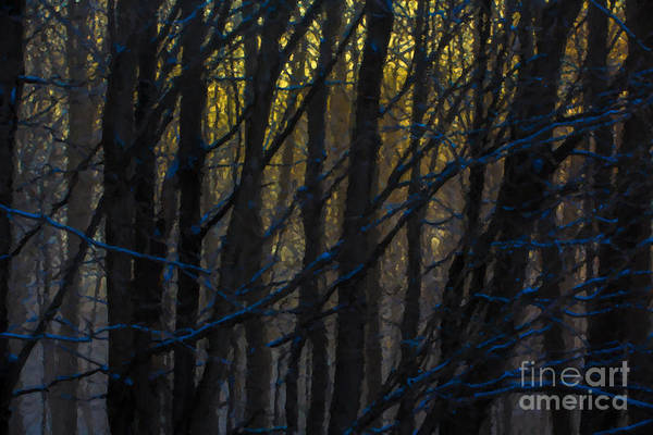 Wall Art - Photograph - Winter Sunrise by Diane Diederich