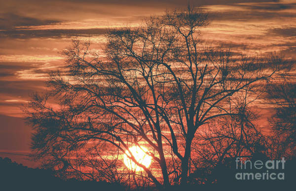Photograph - Winter Sunset by Andrea Anderegg
