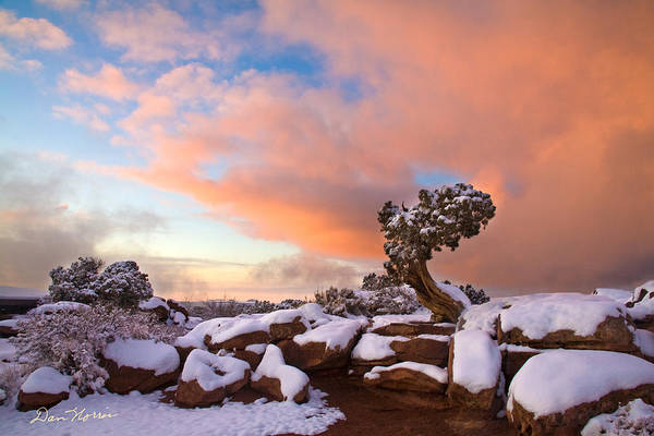 Photograph - Winter Sunset At Deadhorse Point State Park by Dan Norris