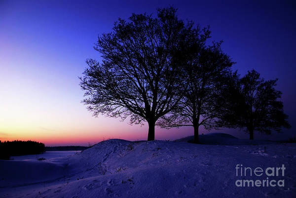Photograph - Winter Sunset by Hannes Cmarits