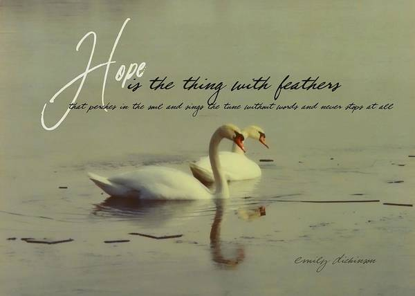 Winter Swans Quote Art Print