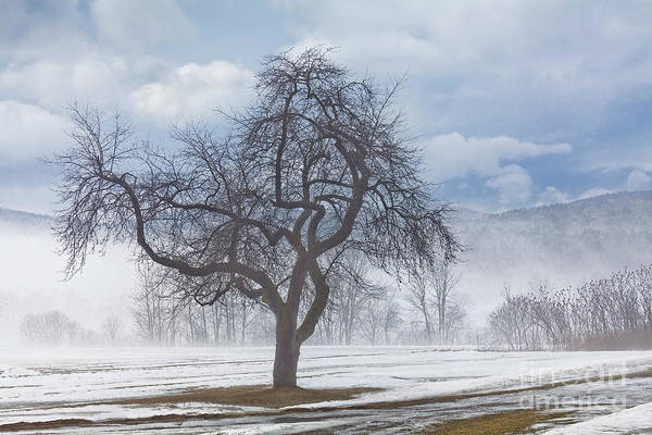Waitsfield Photograph - Winter Thaw by Alan L Graham