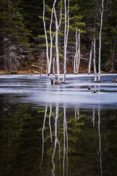 Photograph - Winter Thaw Relections by Tom Singleton