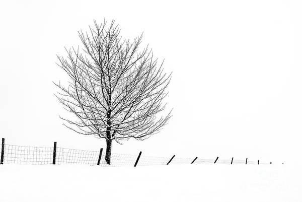 Wall Art - Photograph - Winter Tracery 2 by Janet Burdon