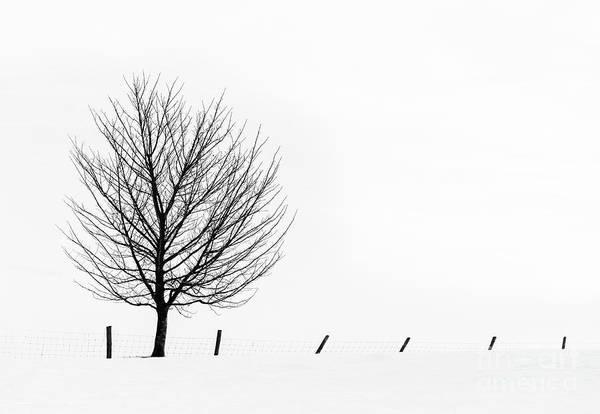 Wall Art - Photograph - Winter Tracery by Janet Burdon