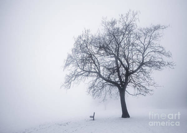 Winter Tree And Bench In Fog Art Print