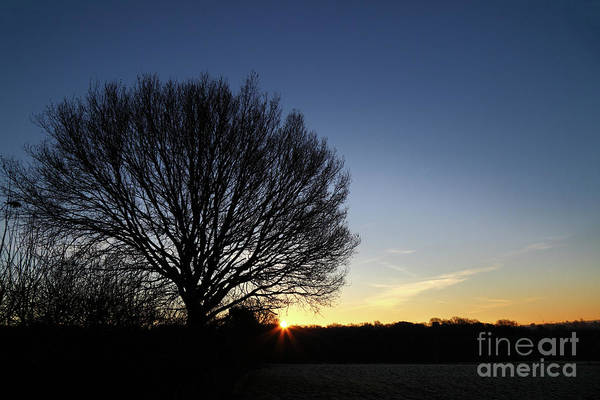Photograph - Winter Tree At Sunrise by James Brunker