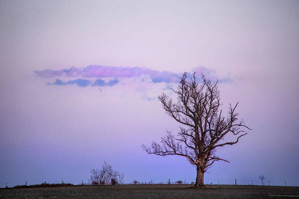 Photograph - Winter Tree At Sunset by Don Johnson