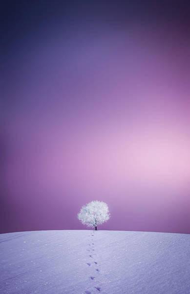 Wall Art - Photograph - Winter Tree by Bess Hamiti