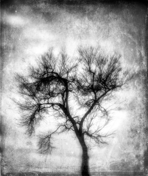 Photograph - Winter Tree-bw by Joye Ardyn Durham
