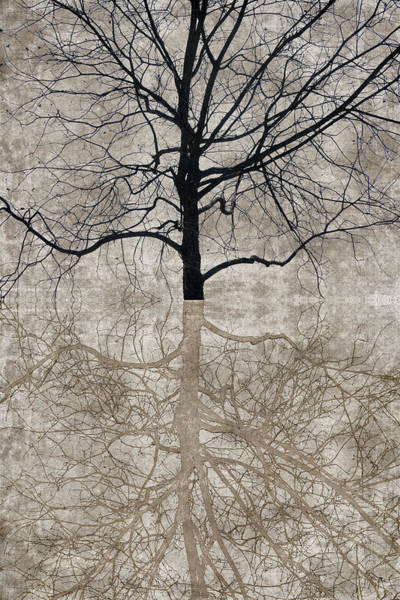 Wall Art - Photograph - Winter Tree by Carol Leigh