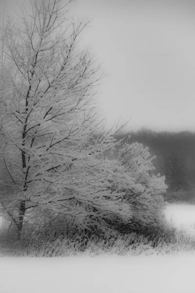 Photograph - Winter Tree by Francisco Gomez