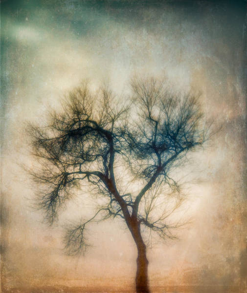 Photograph - Winter Tree by Joye Ardyn Durham