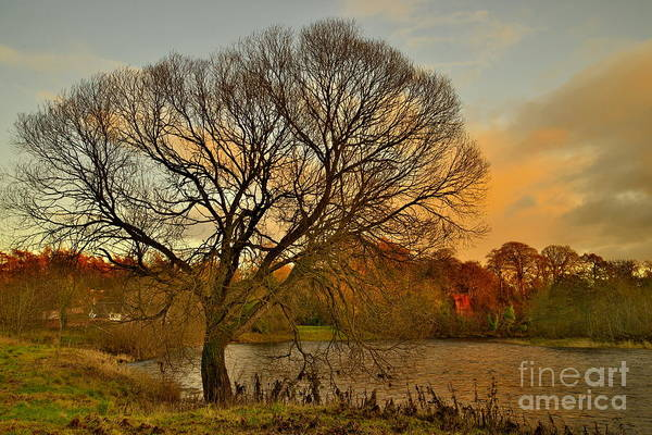 Photograph - Winter Tree On The River Tweed by Martyn Arnold