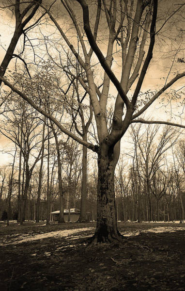 Photograph - Winter Tree Sepia 2018 by Frank Romeo