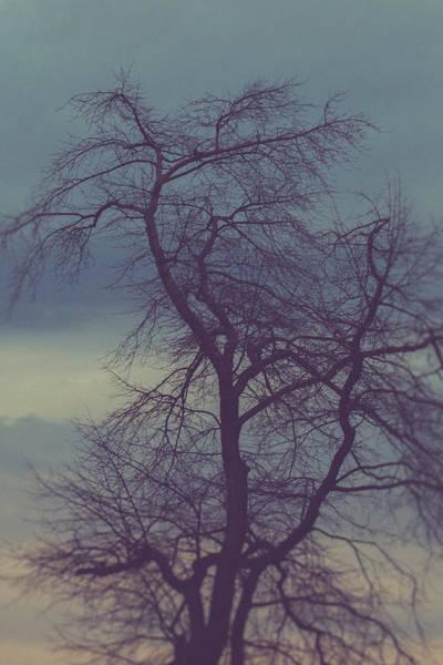 Wall Art - Photograph - Winter Tree by Shane Holsclaw