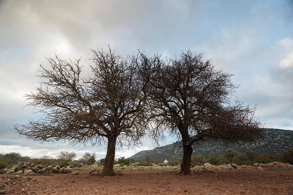 Photograph - Winter Trees #2 by Daniele Fanni