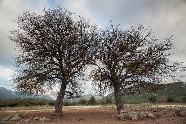 Photograph - Winter Trees by Daniele Fanni