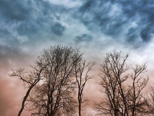 Photograph - Winter Trees Dreamscape by Chris Montcalmo