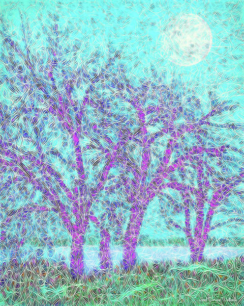 Digital Art - Winter Trees In Moonlight Blue - Boulder County Colorado by Joel Bruce Wallach