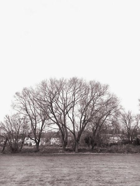 Wall Art - Photograph - Winter Trees Monochrome by Tom Gowanlock
